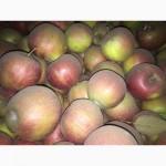 Яблука оптом від виробника