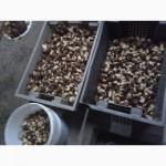Продам грибы польские