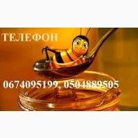 Купую мед від 500 кг