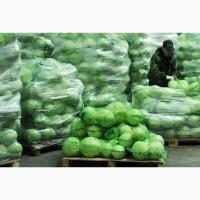 Продам капусту белокачанную, пекинскую от 5 тон