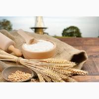 Борошно пшеничне вищого та першого ґатунку ГСТУ 46.004-99 від ВИРОБНИКА