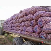 Продаж картоплi опт