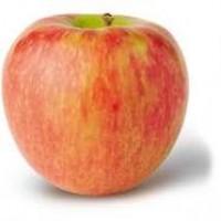 Продам яблука різних сортів високої якості