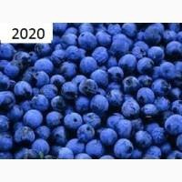 Терн (терен) крупным оптом! Урожай 2020г. Под заказ заготовим любой объем