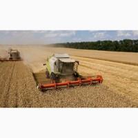 Закуповуємо насіння в вашому регіоні, зручні умови роботи