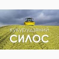 Силос кукурудзяний