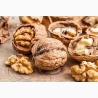 Орехи грецкие куплю оптом. Куплю грецкие орехи в Харьковской области