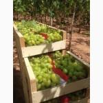 Продаем виноград