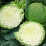 Продам семена ранней капусты белокочанная Этма F1