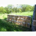 Продам пчелосемьи, бджоли, пчели, вулики, бджолопакети