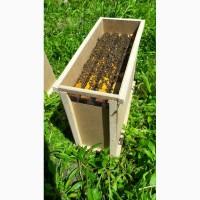 Продам пчелосемьи, бджоли, пчели, вулики, бджолопакети 2019