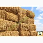 Фермерское хозяйство заключит догор на покупку сена 2019г