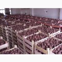 Продам картофель оптом продовольственный