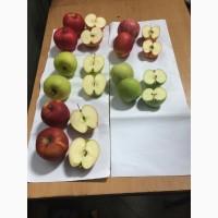 Продам яблока Оптом, Айдаред
