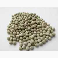 Семена зелёного гороха Зекон (Чехия)