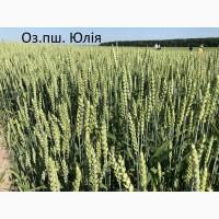 Семена озимой ранней пшеницы Юлия 1-реп. (265-270 дней)