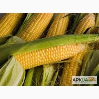 Продам гібрид кукурузи ВН 63 (урож.2016 р.)