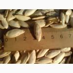 Продам гарбузове насіння Болгарка 50грн./кг