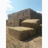 Продам солому (пшенична)