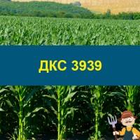 Насіння кукурудзи ДКС 3939