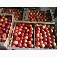 Продам красивые товарные яблоки ОПТ