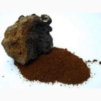 Березовый гриб чага, гриб веселка, сосновые шишки от инсульта