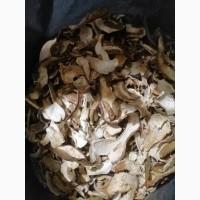 Карпатские грибы