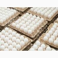 Реализуем яйцо столовое куриная оптовые продажи