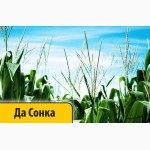 Кукуруза Да Сонка Dow Seeds посевной материал Импорт