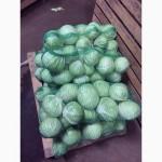 Продам отличную капусту оптом