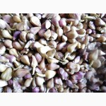 Семена чеснока (воздушка) в наличии на посадку весной