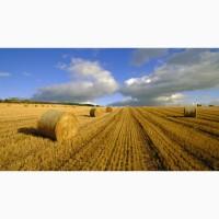 Куплю пшеницу классовую, фураж