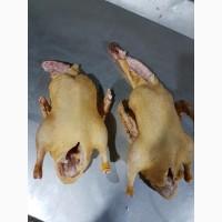 Мясо птицы: курица, утка Мулард, цыплята