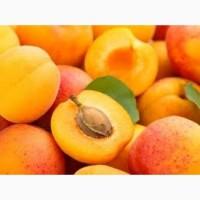Куплю мороженный абрикос оптом, Винницкая обл