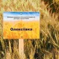 Олексіївка- Алексеевка пшеница озимая продовольственного направления, R2