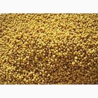 Продам семена Горчицы желтой