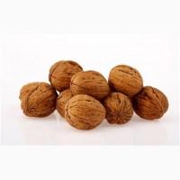 Закупаем Цельные Грецкие Орехи в мешках от 20 тон.Експорт в страны Балканских островов