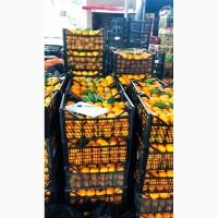 Продам мандарины опт качество супер