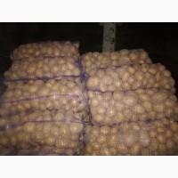 Продам продовольчий картофель