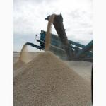 Мука известняковая для раскисления почв - напрямую от производителя