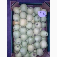 Продам яблука різних сортів, у великих обємах