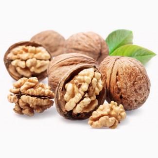 Закупаем грецкий орех (ядро и кругляк) ОПТОМ ДОРОГО