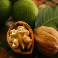 Закуповуємо грецький горіх, квасолю та гарбузове насіння