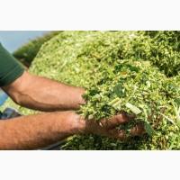 Продам Силос урожай 2020 года