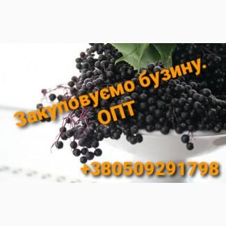 Наше предприятие постоянно закупает бузину, Полтавская обл