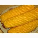 Купим кукурузу фуражную.Самовывоз