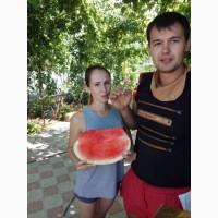 Продам арбуз ТОПГАН