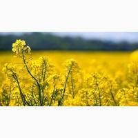 Приймаємо на постійній основі сільгосппродукцію РІПАК по всім регіонам нашої країни