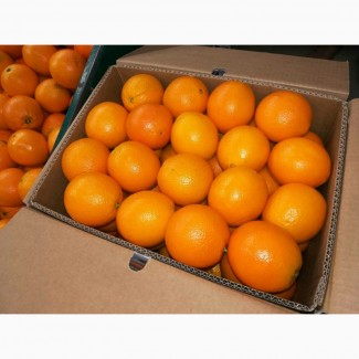 Апельсины Валенсия Навел прямые поставки Египет Orange Valencia