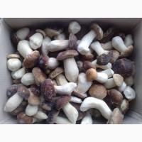 Купить замороженный гриб оптом